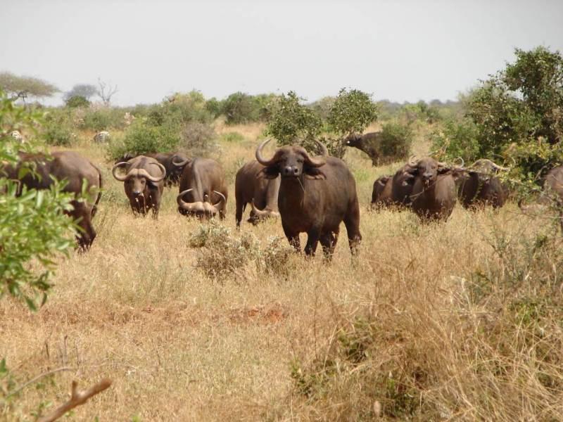 Tsavo_East_National_park2