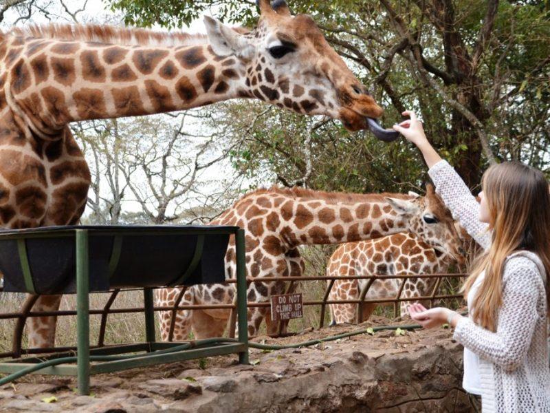 Giraffe_Center