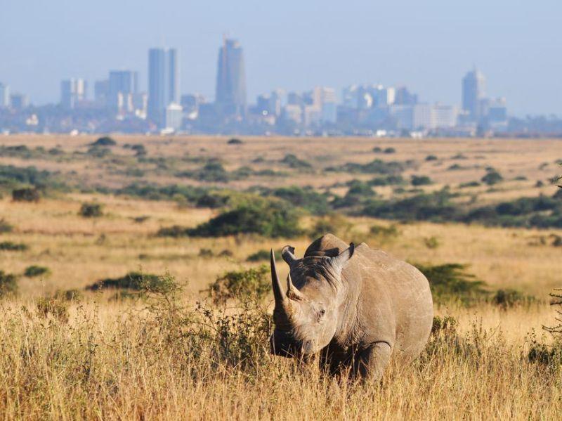 Nairobi National Park2